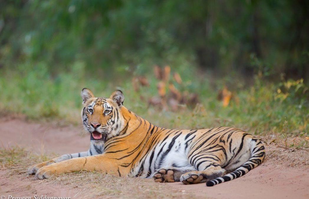 Tiger!!Tiger!!!