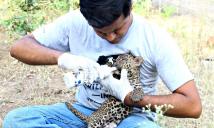 This Delhi-based organisation has rescued, treated, and released over 1,500 wild animals