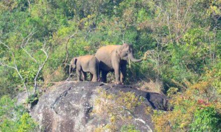 Wildlife sanctuary for Malappuram soon