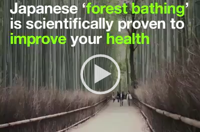 Forest Bathing – Japan