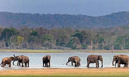 Four dam sites in Karnataka to become tourism hubs