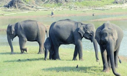 Elephant census from May 17, focus on conflict areas
