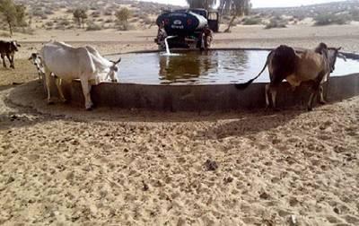 BSF men play Good samaritans to birds, wildlife in Jaisalmer