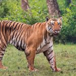 The Prince of Bandipur is no more