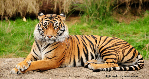 No rights in critical tiger habitats