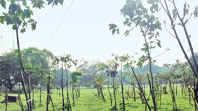 Uttar Pradesh government to plant 6 crore saplings on World Environment Day