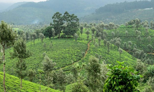 A sojourn to Valparai! The Ghat Section, I adore !!