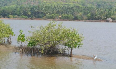 Mangroves, our natural coast guards