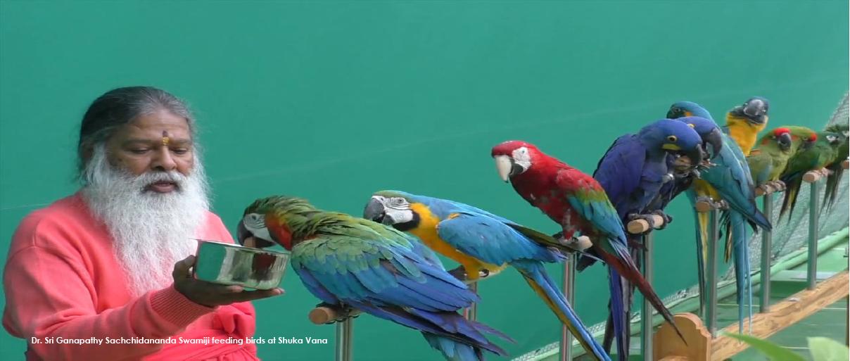 Rehabilitation Centre for Birds – Shuka Vana