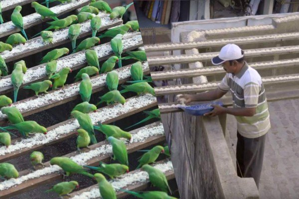The Birdman of Chennai
