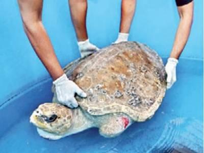 Volunteers from Mumbai get lessons on handling stranded turtles