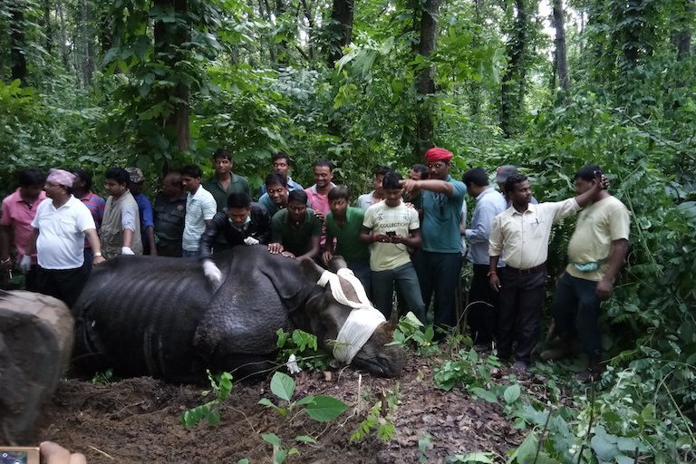India and Nepal Get Together to Rescue Flood-Hit Rhinos