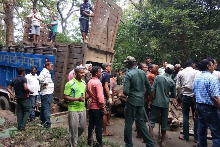 rhino-loaded-for-transport-courtesy-of-Valmiki-Tiger-Reserve