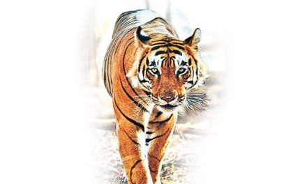 Save our tigers, Cambodia tells India