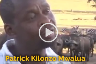 Kenya man drives water truck daily to aid drought-affected animals