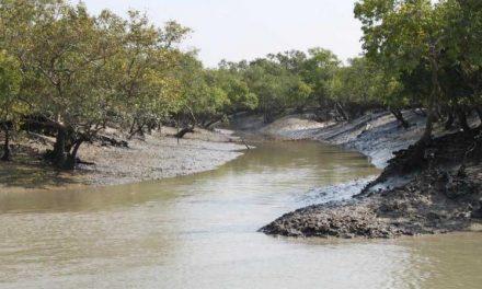 Two Sundarbans officials get green awards