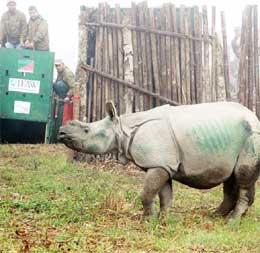 3 rescued orphan rhino calves from Kaziranga get new home in Manas