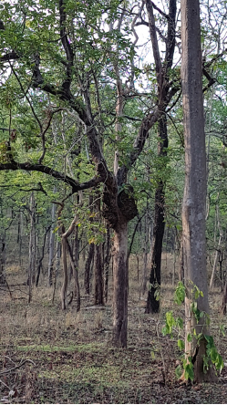 Pench – The Land of Mowgli, Revisited