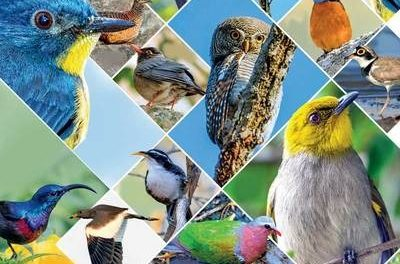 Tweet-tweet! 309 species of birds found in mana Telangana!