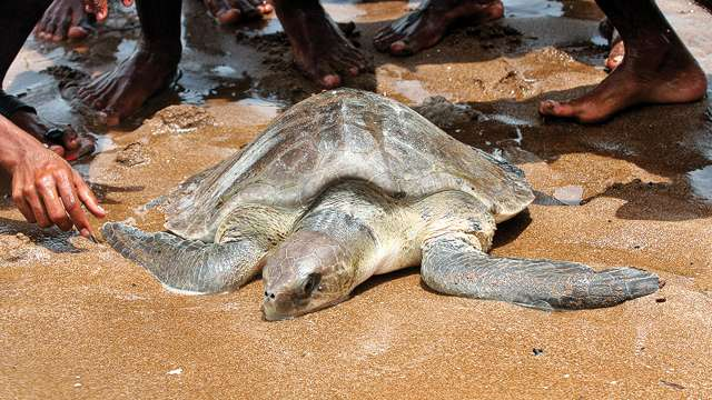 Mangrove cell to set up make-shift centre for rescued marine animals in Versova