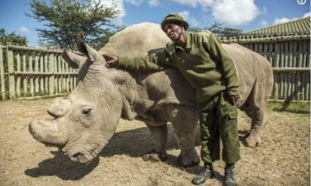 Will Sudan's death lead to the extinction of the northern white rhino species?