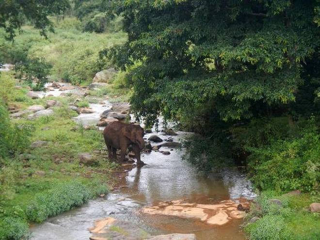 Wildlife thrives along restored Sigurhalla river