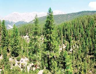 52 Hectares Forest In Sikkim To Be Diverted To Army