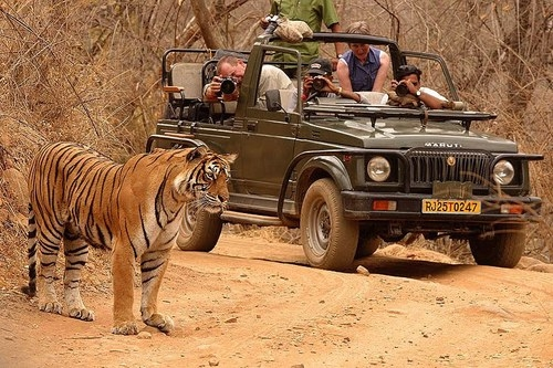 Travel guide to Ranthambore National Park