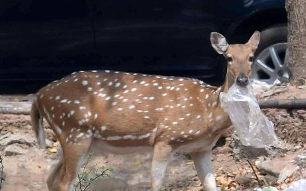 Forest department to rescue 30 deer in Taramani