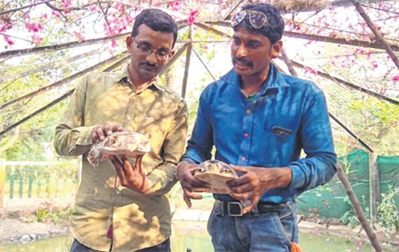 Indore: Students showcase good gesture, give turtles to local zoo