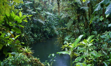 To prevent collapse of tropical forests, protect their shape