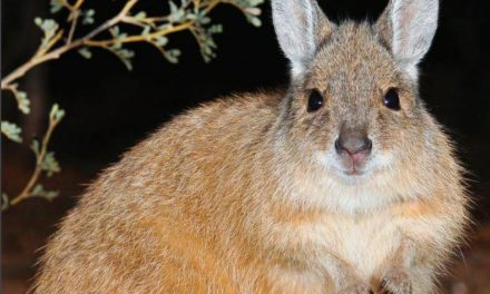 Australia builds world's longest cat-proof fence in bid to save endangered birds and marsupials