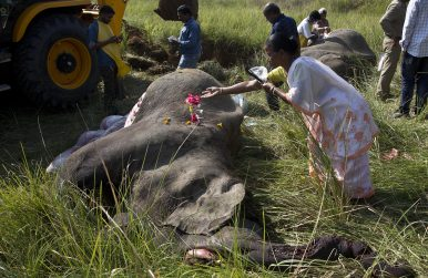 Assam's Elephant Emergency – In northeastern India, human-elephant conflict is getting worse as forest resources dwindle.