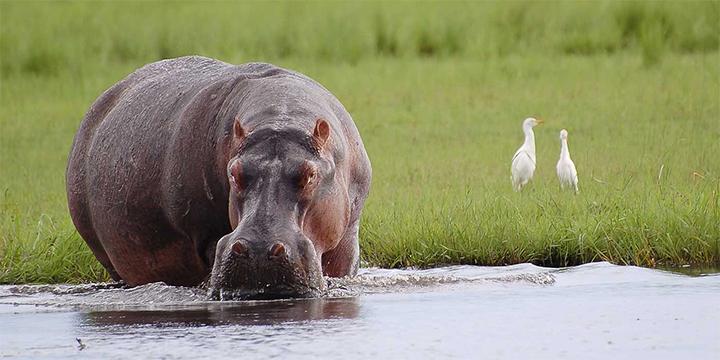 Safari Adventures With Vantage Travel