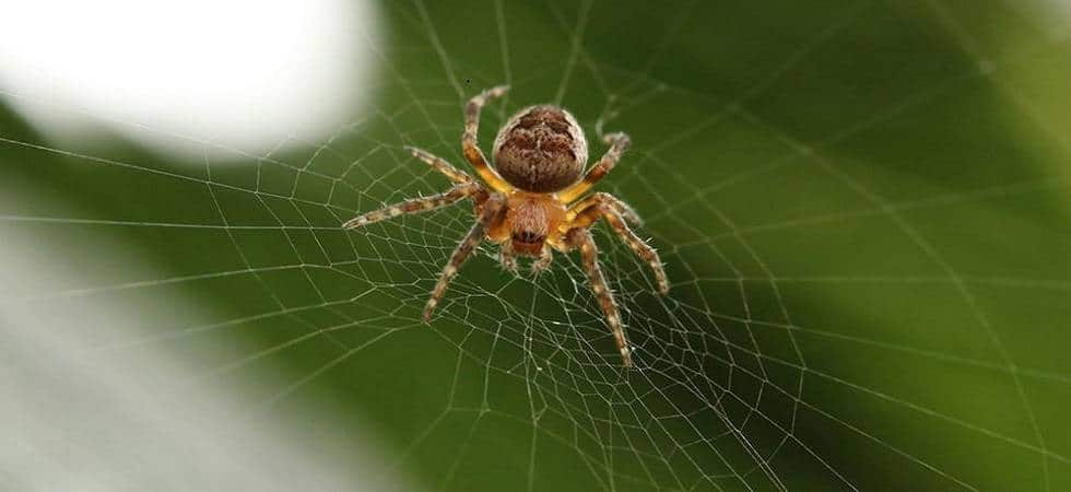 New spider species named after Enid Blyton characters