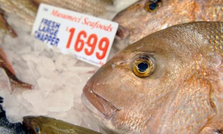 Australia's large fish species declined 30% in past decade, study says