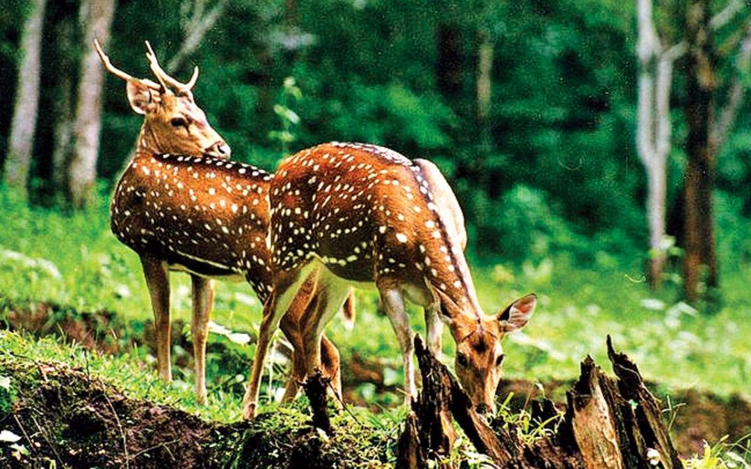 Centre plans to update Wildlife Protection Act
