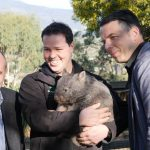 Campaign launched to reduce Tasmanian roadkill