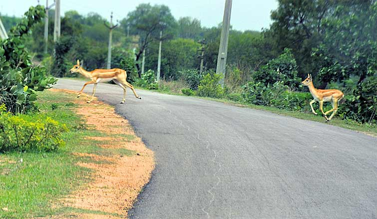Shrinking forests take heavy toll on wildlife in Telangana