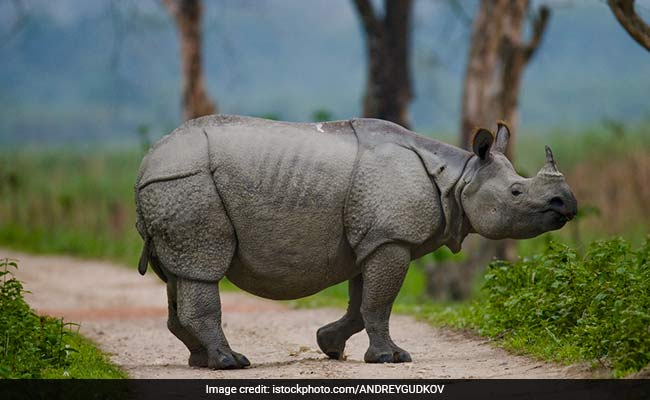 6 Wildlife Destinations In India That Should Be On Your Bucket List