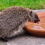 Help wild animals suffering in the heatwave – Wiltshire Wildlife Trust advice