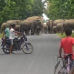 International animal welfare group to secure five elephant corridors in Assam
