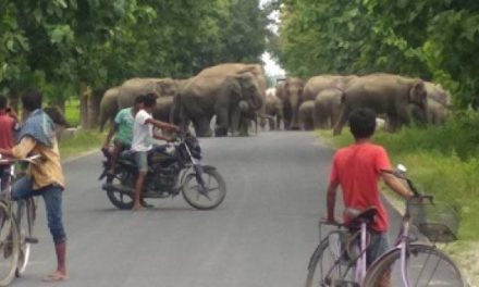 International animal welfare group to secure five elephant corridors in Assam