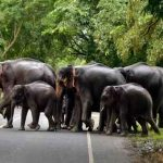 Landslips or rains did not have major impact on wildlife in Kerala, says top forest official