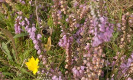 Pollinator Project underway to save wildlife
