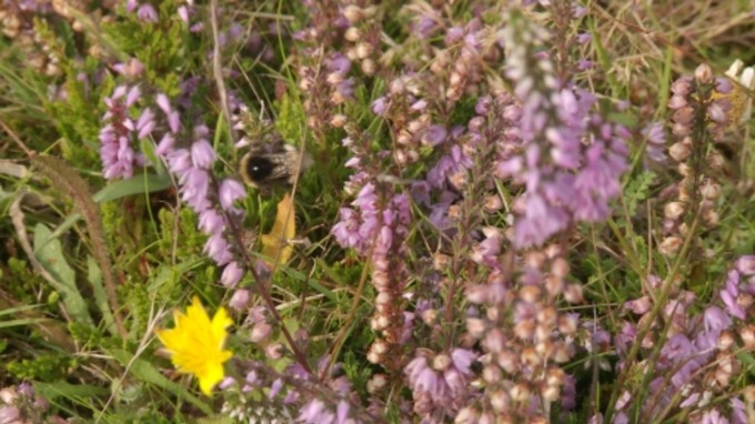 Pollinator Project underway to save wildlife