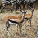 Scientists seek urgent action to save Kenya's wildlife from decline