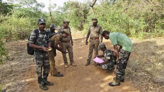 Wildlife census begins at Sathyamangalam reserve