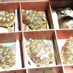 51 rescued Indian Star tortoises brought back from Singapore
