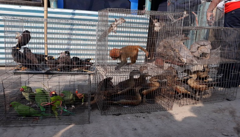 50 endangered wild animals, birds rescued